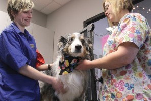 Doggone cute: Groomers transform pets