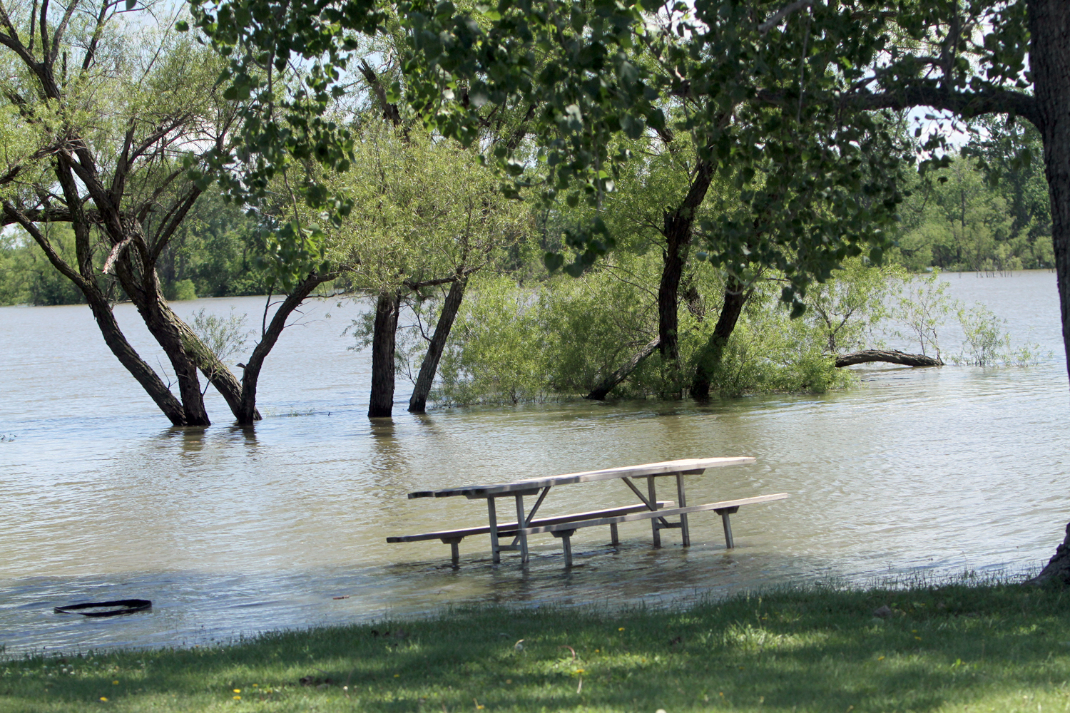 Parts of Harvey County East Park were flooded today. Wendy Nugent/Newton Now
