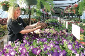 Thousands of ladybugs released at Benton's Greenhouse