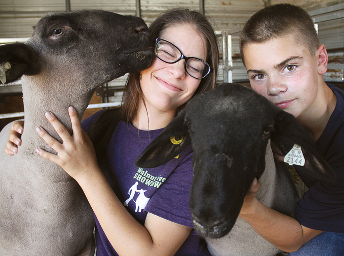 Justin the sheep licks Faye Smith's face while Jerry the sheep and Clayton Smith are at right. Wendy Nugent/Newton Now