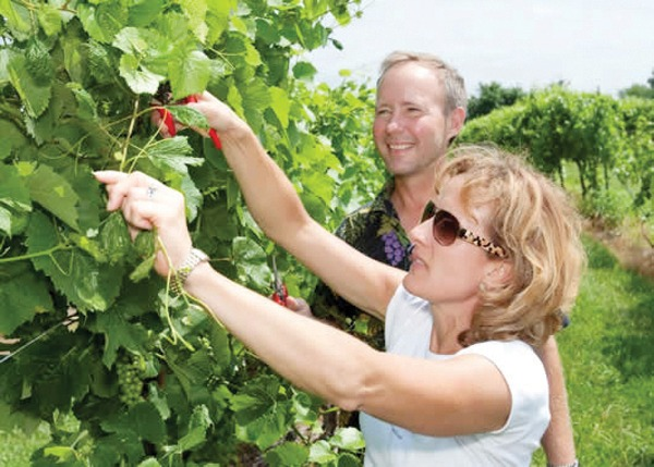 Rural area gets new life through wine production