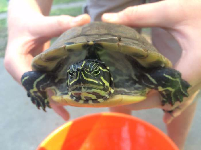 Turtles, goats, bugs, ice cream and other fair tidbits