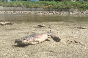 Rules go out the window to remove fish from Sand Creek
