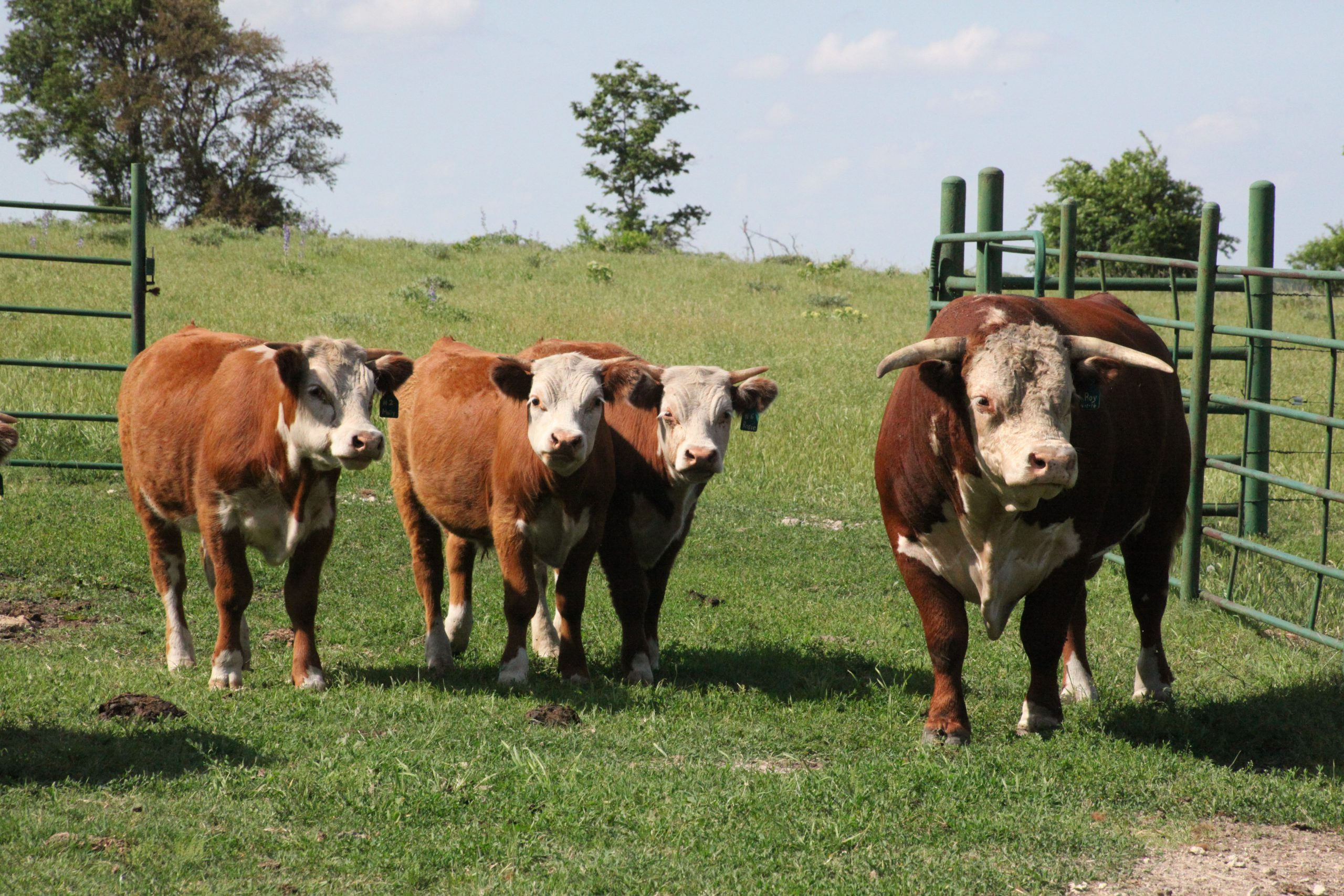 Local ranchers aim for quality over quantity