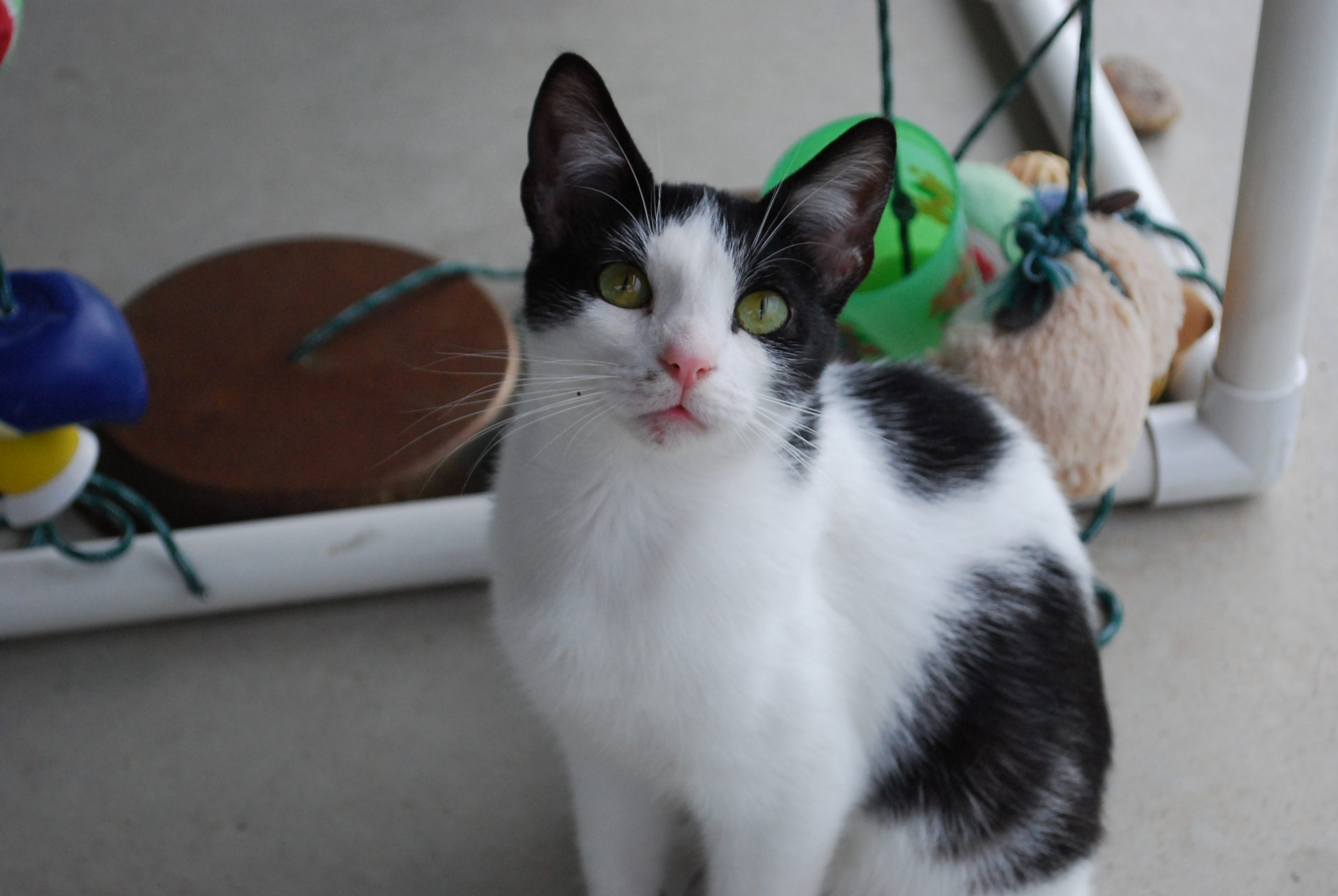 Adopting a cat changes one woman's life